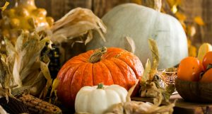 Read more about the article Fall Fun in Florida